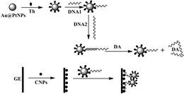 一種基于適體識別作用電化學測定多巴胺的方法