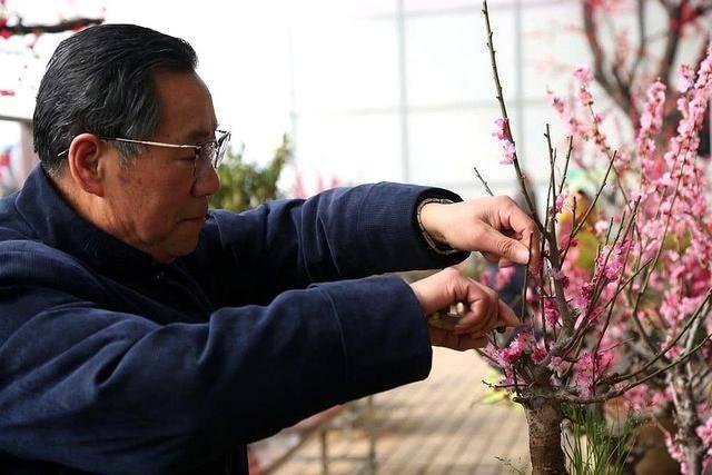 """山东6旬老人成""""梅痴"""",嫁接技术获得专利,年入千万"""