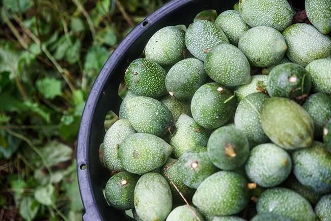 国内专利水果,曾作为很多食物原料
